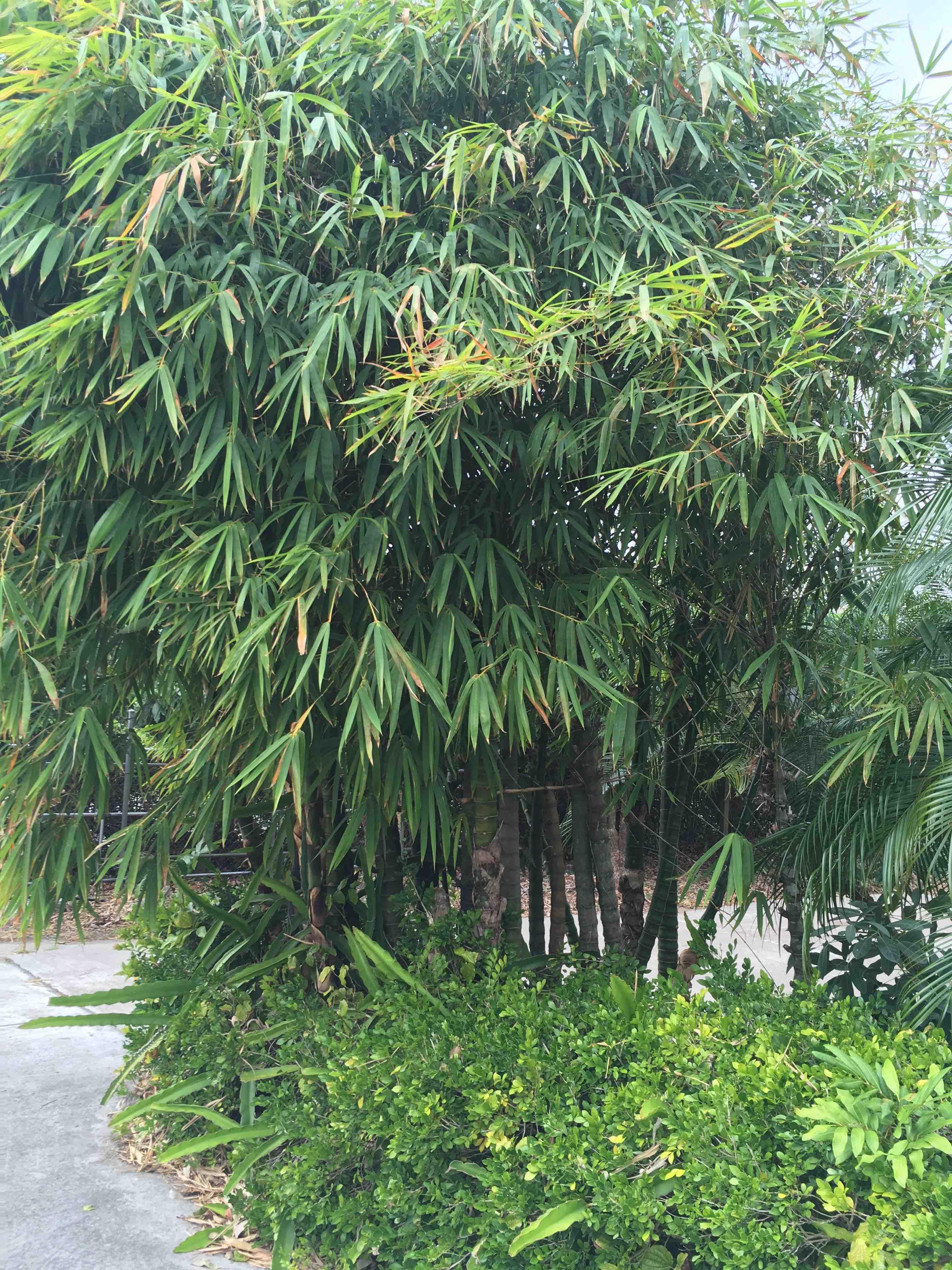 Hình ảnh cây trong thiên nhiên. Cay Tre Nơi vùng thung lũng ...